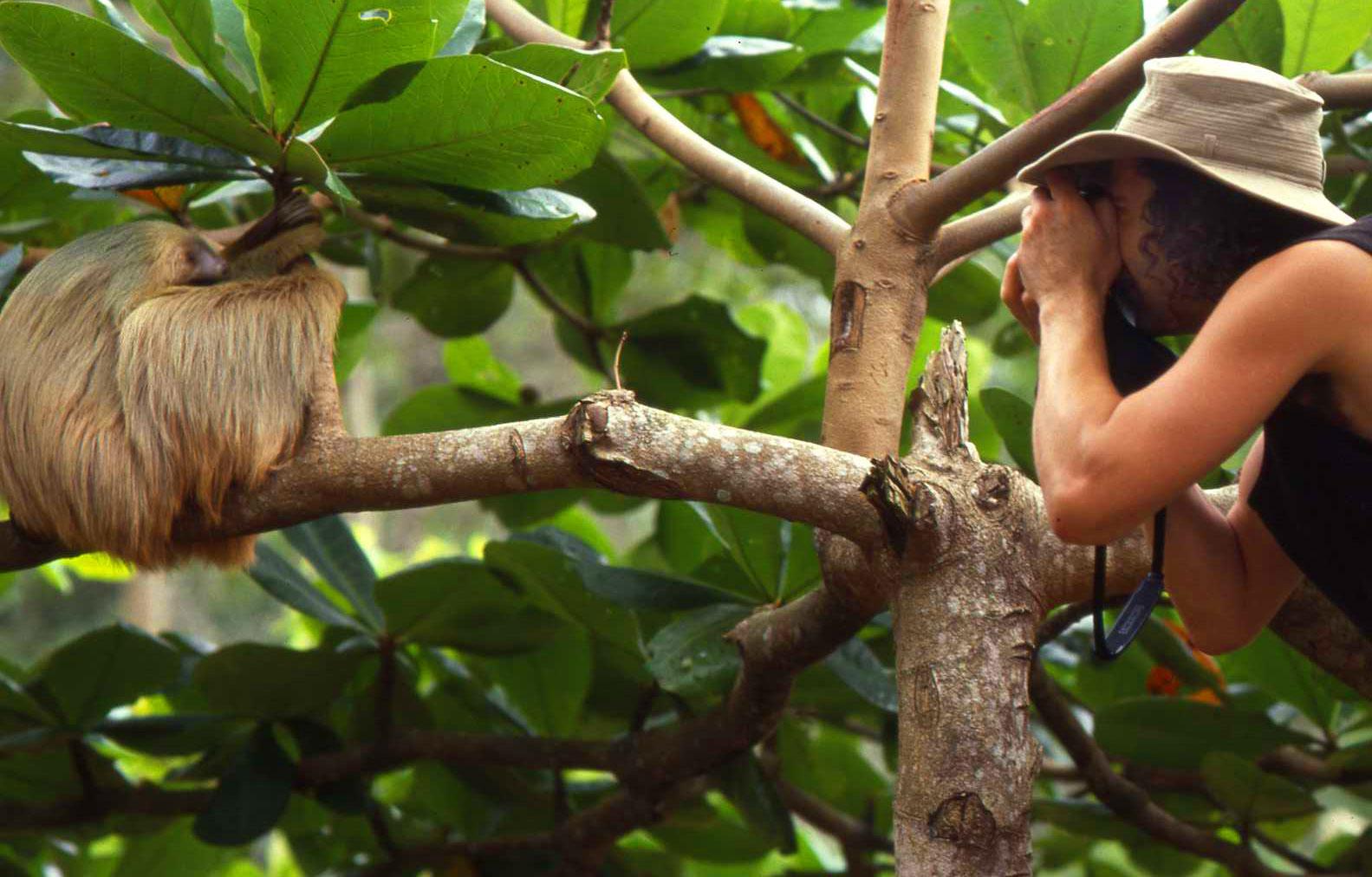 Faultier in Guatemala auf einer Mittelamerika Rundreise