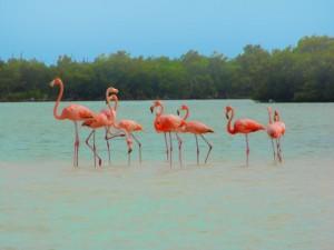 Flamingos im Naturpark Celestún