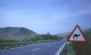 Fuerteventura7