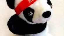 Panda China Tours