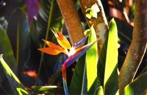 TFS-Botanico