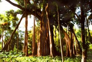 TFS-Botanico2