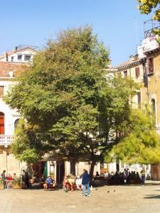 abseits der Touristenströme kann man das ursprüngliche Venedig in Ruhe genießen