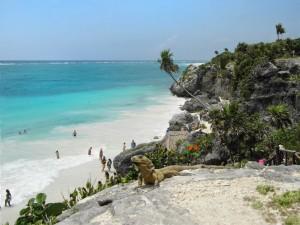 Leguan Yucatan