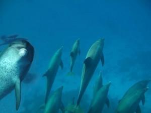 Delfine vor Dubrovnik